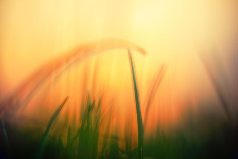 day-245-dream-a-lilldream