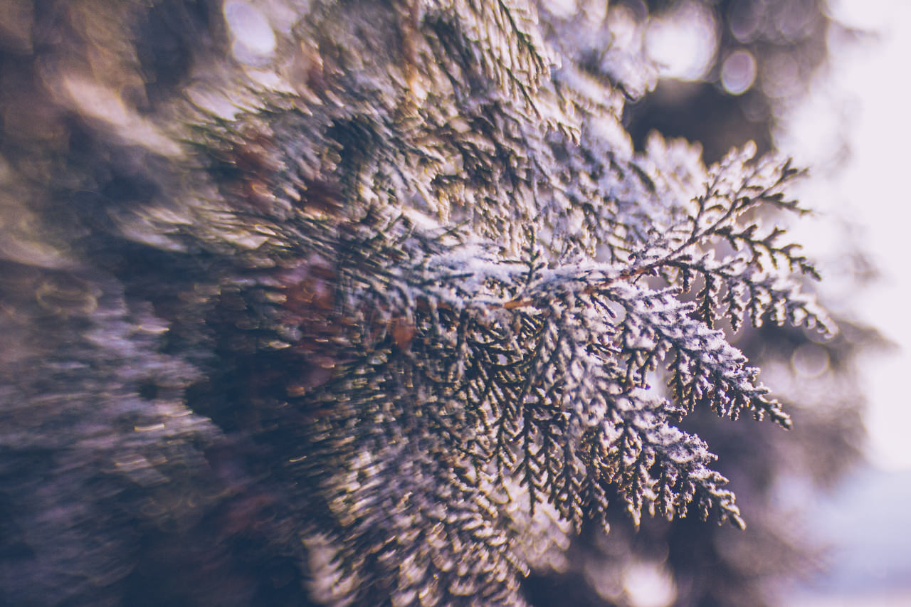 365-lensbaby-teoinpixeland-ro-day-96-9169