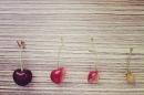 Day 214 – Cherry visit