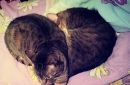 Day 232 – Hart full of kitties
